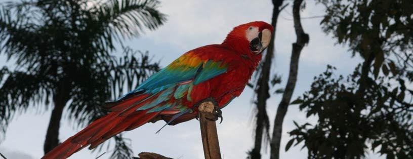 ecuador-amazonia