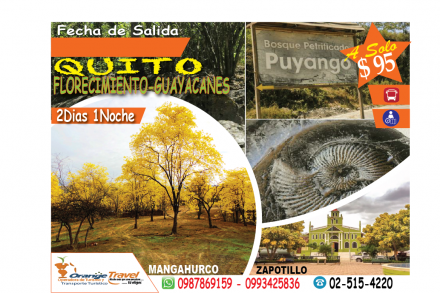 TOUR GUAYACANES ACT